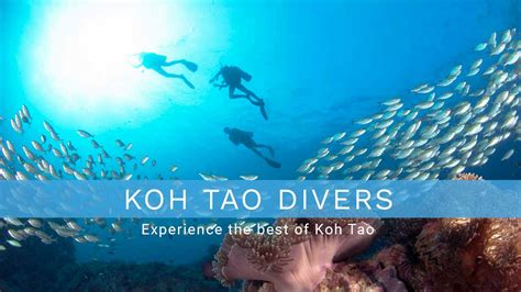 Dive Center Koh Tao - koh tao divers since 1987 operated dive center