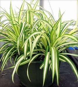 Zimmerpflanzen Für Dunkle Ecken : welche zimmerpflanzen brauchen wenig licht ~ Michelbontemps.com Haus und Dekorationen