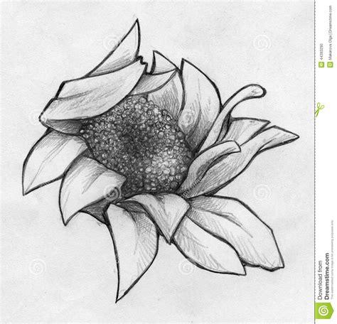 crumpled daisy close  sketch stock illustration