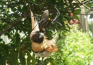 Spider Attack: Clever, Scary Arachnid Hunting Strategies ...