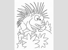 Porcupine in attacking mood coloring pages Download Free