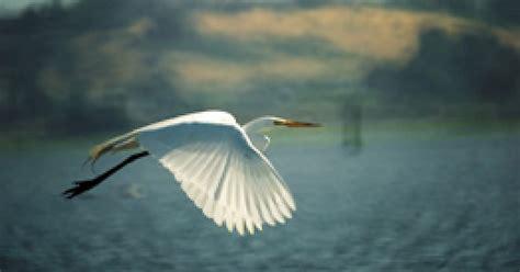 bird watching wildlife marin county  marin