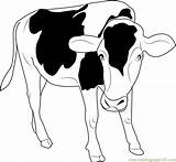 Cow Coloring Pages Angus Drawing Coloringpages101 Pdf Getdrawings sketch template