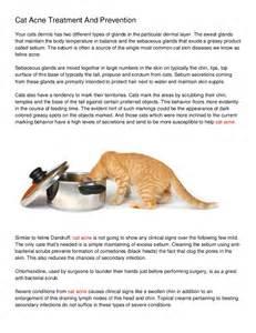 cat acne treatment feline acne cat acne treatment at home