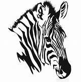 Zebra Head Drawing Animal Drawings Heads Sketch Coloring Hdimagelib Credit Larger Yahoo sketch template