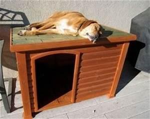 Casetas para perros como deben ser eroski consumer for Cost to build a dog house