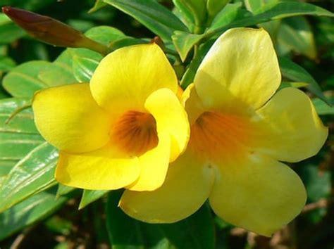 kumpulan nama bunga lengkap    beserta gambar