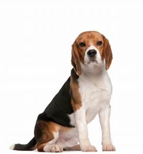medium sized dog breeds