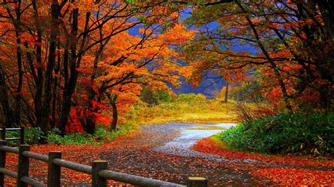 Colourful Autumn Background by Autumn Fall Trees Fence Path Trail Colorful Leaves Foliage