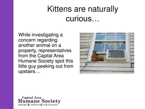 capital area humane society animal rescue shelters ppt a dramatic kitten rescue powerpoint presentation