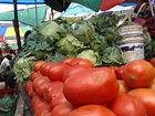 Tanzania: Genetically Modified Crops | Pulitzer Center