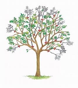 Kirschbaum Richtig Schneiden : die besten 25 kirschbaum schneiden ideen auf pinterest apfelbaum pflege pflanzkalender und ~ Frokenaadalensverden.com Haus und Dekorationen