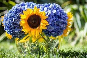 sunflower arrangements ексклюзив улюблені квіти відомих жінок закарпаття