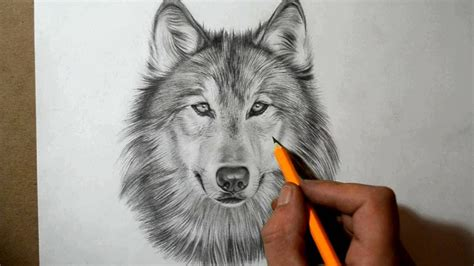 wolf pictures kids search