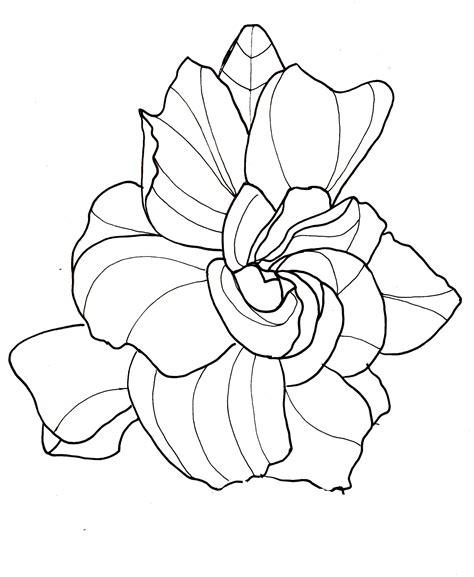 Gardenia Drawing by Line Drawing Flowers Gardenia Drawings Flower Line