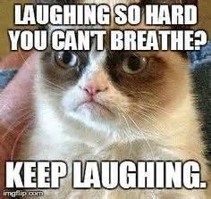 Pet Insurance Meme - 1000 images about grumpy cat on pinterest grumpy cat grumpy cat meme and funny grumpy cats