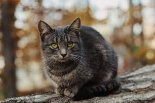 ferrel cat feral cat advice and tips fetch pet care
