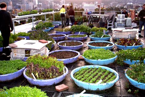 how to rooftop garden how to build a rooftop community garden rooftop community gardens