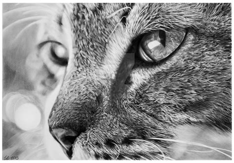beautiful  realistic animal sketches