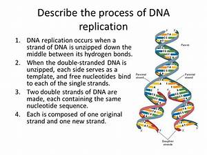 dna structure and replication ppt video online download With explain how dna serves as its own template during replication