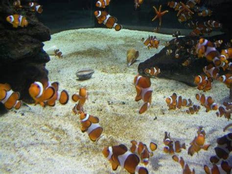 aquarium des deux oceans aquarium des deux oceans picture of cape town central cape town tripadvisor