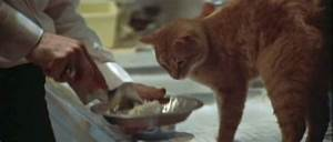 CAT OF THE DAY 019 THE LONG GOODBYE CATS ON FILM