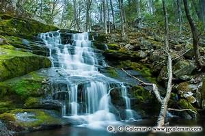 Springtime Twilight on Falls Brook – J G Coleman Photography