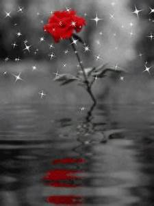 Animated Rose And Rain Mobile Phone Wallpapers 240x320 ...