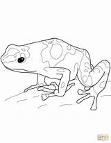Frog Dart Poison Coloring Pages Yellow Banded Printable Drawing Frogs Rainforest Drawings 1600px Getdrawings Template Popular sketch template