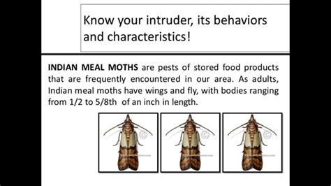 fly how to get rid of indian meal moth