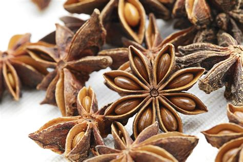 etoile de badiane cuisine badiane planter et cultiver ooreka