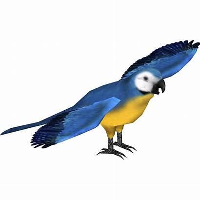 Macaw Martinique Bite