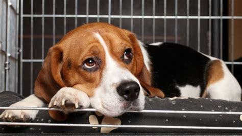 dog crying  crate   stop  barking royalty