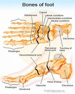 Broken Foot  Learn About Treatment And Symptoms