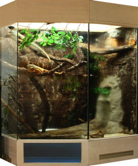 Terrarium Heizung Selber Bauen by Das Leguan Terrarium Heizung Uv Beleuchtung Temperatur