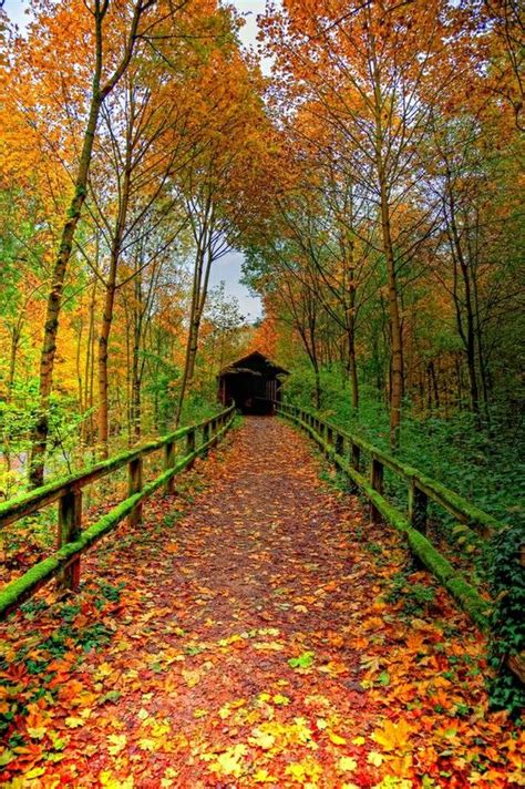 beautiful fall colors pin by jackie pace on fall in new england pinterest pathways covered bridges and fall
