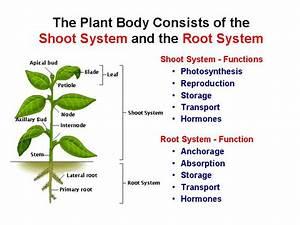 seed plant structure   وبلاگ 24 - مرجع وبلاگ فارسی