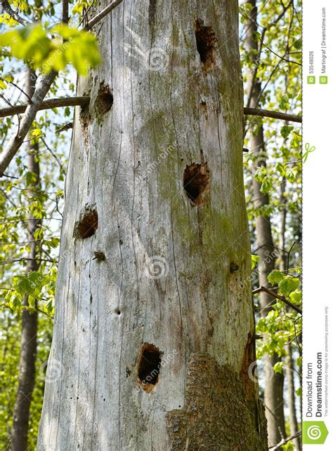 trous de pivert dans le tronc d arbre photo stock image 53548026