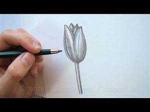 Zeichnen Lernen Mit Bleistift : tulpe zeichnen lernen ~ Frokenaadalensverden.com Haus und Dekorationen