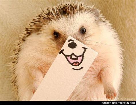 Smiling Hedgehog Marutaro
