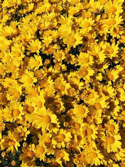 Aesthetic Wallpapers Yellow Flowers Flower