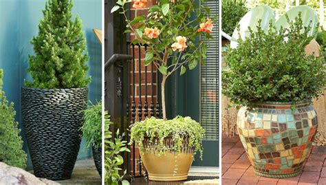 porch trees for potted trees for a beautiful porch