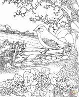 Goldfinch Coloring Pages Print Eastern Bird Colouring Jersey State Supercoloring sketch template