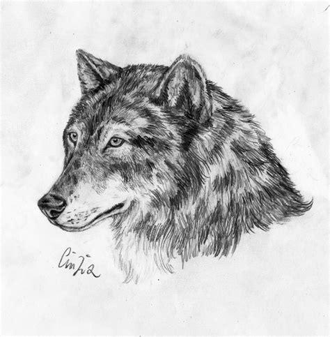 lupo disegno facile per bambini lupo grigio disegno libero
