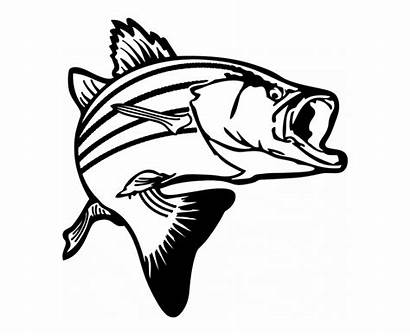 Salmon Fishing Clipart Clip Bass Skeleton Fish