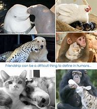 Friendship Quotes with Animals