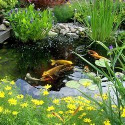 Karpfen Im Gartenteich : algen im gartenteich bek mpfen mein sch ner garten ~ Lizthompson.info Haus und Dekorationen