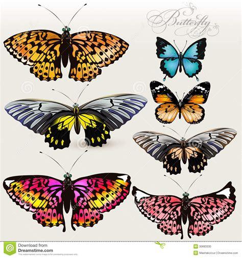 insieme delle farfalle realistiche variopinte di vettore per progettazione fotografia stock