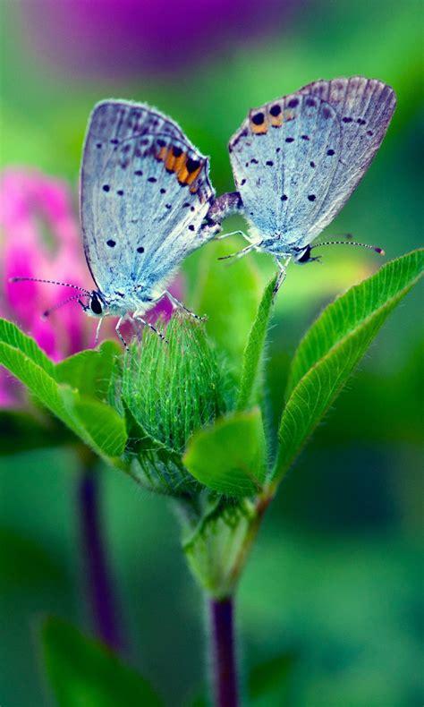 Butterfly flower wallpapers wide full. Butterfly Wallpaper for Tablets - WallpaperSafari