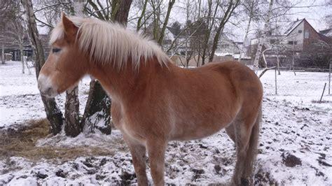 Altes Pferd Zu Dünn